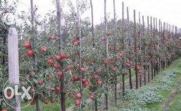 Жалоба-отзыв: Сбор яблок - Мошенники будьте аккуратны!!! не едьте на работу.  Фото №1