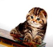 Жалоба-отзыв: Олх мошенница анжела киев 0992957155 - Анжела из киева продает несуществующих котят.  Фото №1