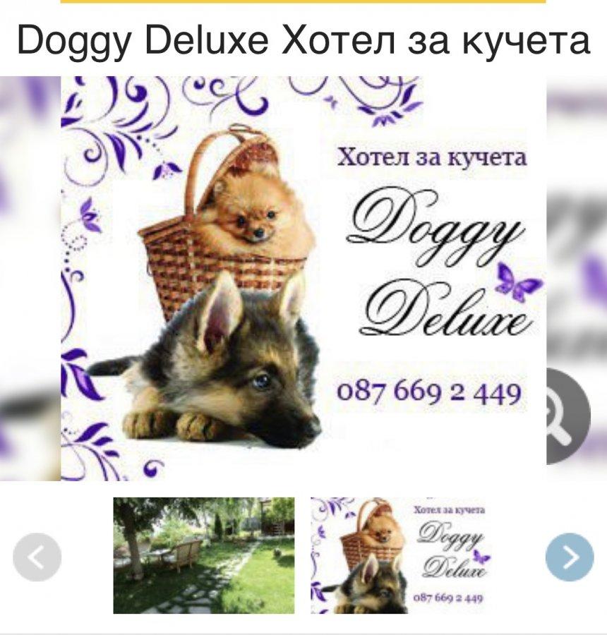 Жалоба-отзыв: Doggy deluxe Milena shekerdzhieva-Milcheva - Doggy Deluxe Остерегайтесь!
