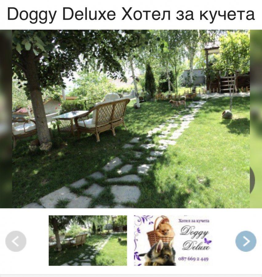 Жалоба-отзыв: Doggy deluxe Milena shekerdzhieva-Milcheva - Doggy Deluxe Остерегайтесь!.  Фото №2